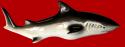 Акула малая